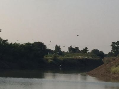 Gajpur - Biodiversity!